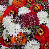 Gisela, FLOWERS, BLUMEN, FLORES, photos+++++,DTGK1899,#f#