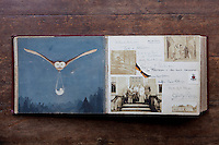 The painting in Lord Rathdonnell's grandmother's photograph album is of an owl delivering her sister Golly Drew