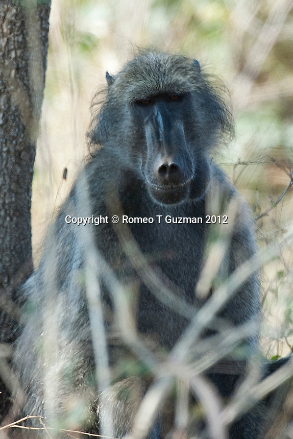July 25, 2012: Drive to Satara Camp in Kruger National Park in South Africa