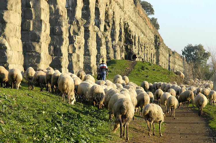 Roma, Gennaio 2009.Parco degli acquedotti.periferia sud est di Roma.Pecore al pascolo.Rome, January 2009.Park of the aqueducts.suburb southeast of Rome.Sheep grazing