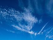 Cirrocumulus and cirrus clouds.