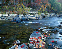 Fall color along the Big South Fork River at Leatherwood Ford; Big South Fork National River & Recreation Area, TN
