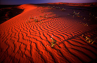 The sun slowely starts to set over the rippled sand dunes of the spectacular Strzelecki Desert.
