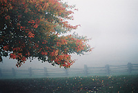Photo of a misty morning along the Blue Ridge Parkway.