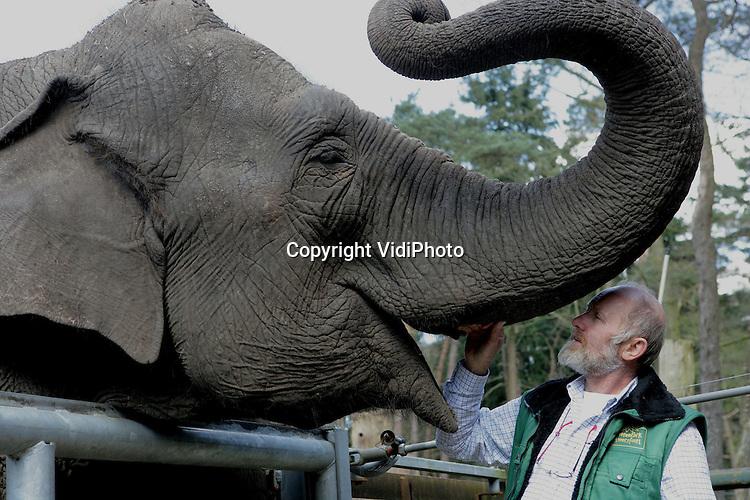 Foto: VidiPhoto..AMERSFOORT - Zoo-manager Mario Hoedemaker van Dierenpark Amersfoort troost woensdag olifant Indra. Afgelopen nacht doodde zij samen met moeder Kine War War haar zojuist geboren jong, waar door het dierenpark zo lang naar was uitgezien. Een olifantengeboorte is vaak pijnlijk voor de moeder en hierdoor kan bij haar agressie ontstaan. In deze agressie kan de moeder het kalf doden. Dit is ook gebeurd in DierenPark Amersfoort.