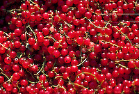 Currant berries
