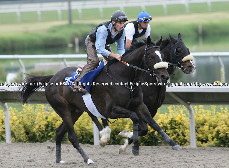 02 August 2009: Zenyatta works five furlongs under exercise rider Steve Willard at Del Mar Race Track, Del Mar, CA