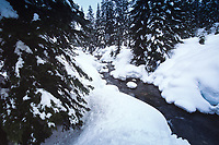 Winter in the Cascades, Alpental, Snoqualmie Pass, Mt. Baker-Snqualmie National Forest, Washington, US