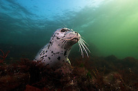 Seal and Sea Lion Photos