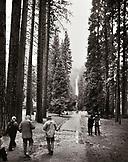 USA, California, Yosemite National Park, the trail to Yosemite Falls (B&W)