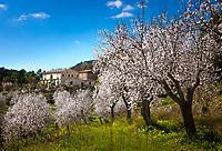 Spain (Mallorca)
