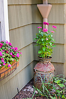 Rustic iron jug being used as planter container pot for annual zinnia flowers in pink next to house drainage pipe, with windowbox of impatiens, using antique old items in garden, flea market finds