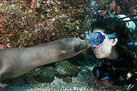 QT7229-D. California Sea Lion (Zalophus californianus) interacting with scuba diver (model released), biting diver's exhaled bubbles. Baja, Mexico, Sea of Cortez, Pacific Ocean.<br /> Photo Copyright &copy; Brandon Cole. All rights reserved worldwide.  www.brandoncole.com