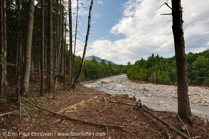 Riverbank erosion along the East Branch of the Pemigewasset River in Lincoln, New Hampshire USA from Tropical Storm Irene in 2011. This tropical storm / hurricane caused destruction along the East Coast of the United States and the White Mountain National Forest of New Hampshire was officially closed during the storm.