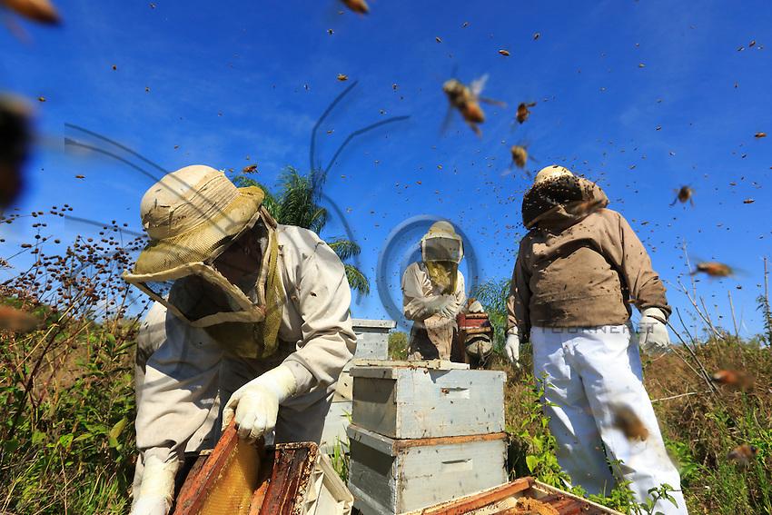 The Africanized bees usually make preventive attacks. They attack in the greatest number and follow their victim over hundreds of metres. ///Les abeilles africanisées ont l'habitude d'attaquer de façon préventive. Elles attaquent en plus grand nombre et suivent leur victime sur des centaines de mètres.