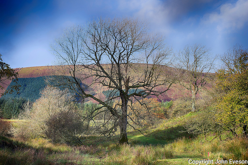 Tree, Dinkling Green, Whitewell, Clitheroe, Lancashire.