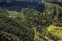 Conceicao do Castelo_ES, Brasil...Lavouras de cafe vistas ao lado de tercho da Rota Imperial...Coffee plantation next to Imperial Route...Foto: LEO DRUMOND / NITRO