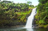 Kulaniapia Falls, tropical rainforest jungle, Hilo, Big Island.