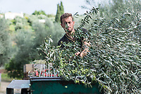 Griechenland | Olivenernte 11/2016