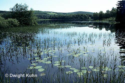 PO01-030z  Pond with water plants