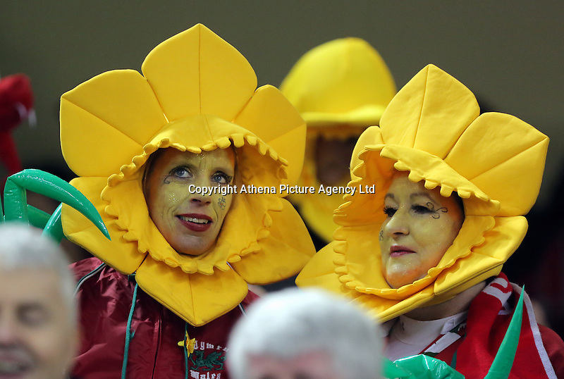 Wales supporters wearing daffodil hats before the Wales v France, 2016 RBS 6 Nations Championship, at the Principality Stadium, Cardiff, Wales, UK