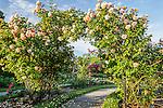 Chihuly Roses in the James P. Kelleher Rose Garden, Boston, Massachusetts, USA