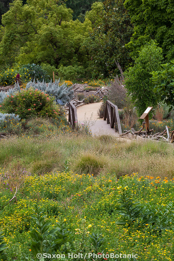 Crescent Farm, sustainable demonstation garden with wildflower meadow; Los Angeles County Arboretum and Botanic Garden