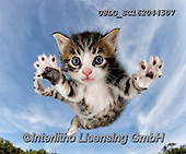 REALISTIC ANIMALS, REALISTISCHE TIERE, ANIMALES REALISTICOS, cats, paintings+++++,USLGSC162044507,#A#, EVERYDAY ,photos,fotos,pounce,cat,cats,kitten,kittens,Seth