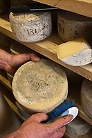 Europe/France/Aquitaine/64/Pyrénées-Atlantiques/Pays Basque/Itxassou: Affinage du Fromage AOC Ossau-Iraty à la Ferme Antxondoa - GAEC Antxondoa