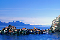 Sea Lion haulout, Knight Island in the distance, Prince William Sound, Alaska
