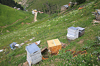 On the Anzer plateau, a hive has been attacked by a bear just a few metres from the house. The density of bears is high in these mountains and their weight can reach 230 kilos.///Sur le plateau d'Anzer, un rucher a été attaqué par un ours à quelques mètres d'une habitation. La densité des ours est importante dans ces montagnes, et leur taille peut atteindre 230 kilos.