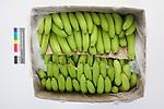 Nick Bananas Box