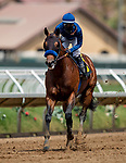 AUG 01: Cezanne before the Shared Belief Stakes at Del Mar Thoroughbred Club in Del Mar, California on August 01, 2020. Evers/Eclipse Sportswire/CSM