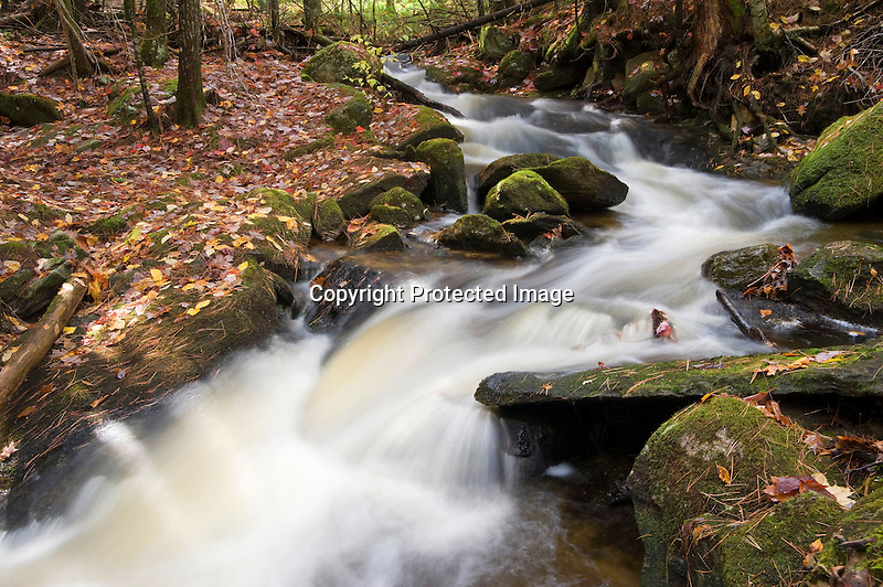 Gushing Forest Brook
