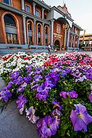 Hermosillo 2012.<br /> Flores lilas  en el macetero frontal de la  fachada de el Poder Judicial de el Estado de Sonora. HermosilloSonoraMexico. <br /> &copy;Foto: LuisGutierrez/NORTEPHOTO.COM