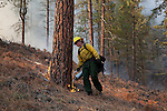 Prescribed fire in ponderosa pine forest in fall on Sinlahekin Wildlife Area in Okanogan County, WA..Treatment unit is Conner 5, which had been logged and thinned in winter prior..Jessica Hylton lighting slash with drip torch.
