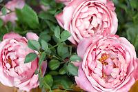 artificial Roses | kuenstliche Rosen