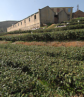 "Dormatories at The Tian Hu (Sky Lake) Tea Farm in the mountains outside Fuding City, Fujian Province where ""Silver Tip"" tea is produced.  Workers here are paid around 53 pounds a month during harvest season, they work ten hour days, seven days a week and the women work with the children strapped to their backs. The tea sells for upto 20 pounds a pot in the UK."