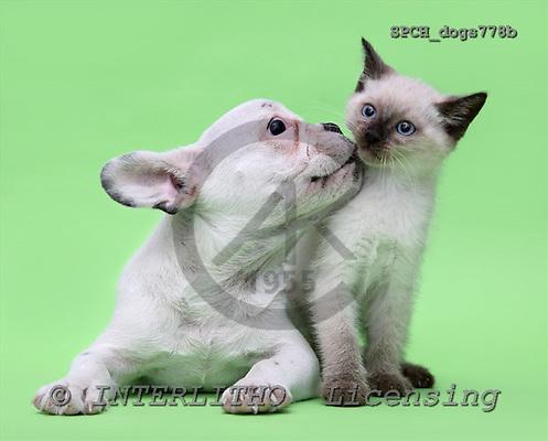 Xavier, ANIMALS, dogs, photos, SPCHdogs778b,#A#