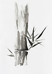 Beautiful Zen painting of bamboo stalk and leaves. Sumi-e Chinese Japanese black ink on rice paper painting fine art.