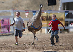 Joe Greenwood, 10, left, and his brother Peter, 7, compete in an emu race during the 54th International Camel Race in Virginia City, Nev., on Friday, Sept. 6, 2013.  <br /> Photo by Cathleen Allison