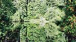 Dense biodiversity of the Olympic Rain Forest reflects in Lake Sylvia, near Montesano, Washington.