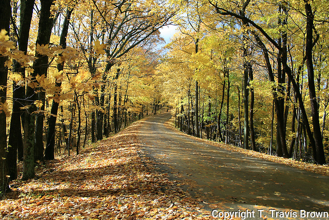 Beautiful view of a Brown County State Park road lined with sugar maples in the fall.