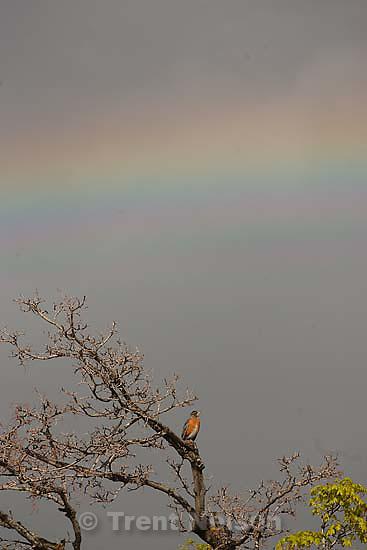 Robin and rainbow..Saturday May 2, 2009 in Salt Lake City.