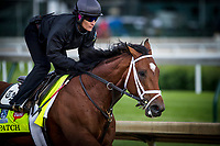 LOUISVILLE, KY - MAY 03: Patch gallops in preparation for the Kentucky Derby at Churchill Downs on May 03, 2017 in Louisville, Kentucky. (Photo by Alex Evers/Eclipse Sportswire/Getty Images)