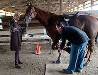 "Tee Time, a Tennessee Walking Horse, is inspected by Nathan Slaven (right) of Independence, Ore., under the watchful gaze of his owner, Sue Williams, from McCleary, Wash., at the Northwest Walking Horse Classic in Spanaway, Wash., on July 11, 2015. Slaven is a ""designated qualified person (DQP) certified by the USDA to check for soring, an illegal practice that involves burning a horses skin with chemicals or pressure padding. The horse passed his inspection. (© Karen Ducey Photography)"