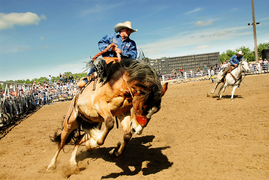 A cowboy rides a bronco during Bucking Horse Sale in Miles City, Montana.