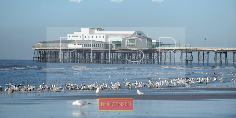16/02/2011 Blackpool Lancashire UK.Seagulls gather at the waters edge...© Phill Heywood.