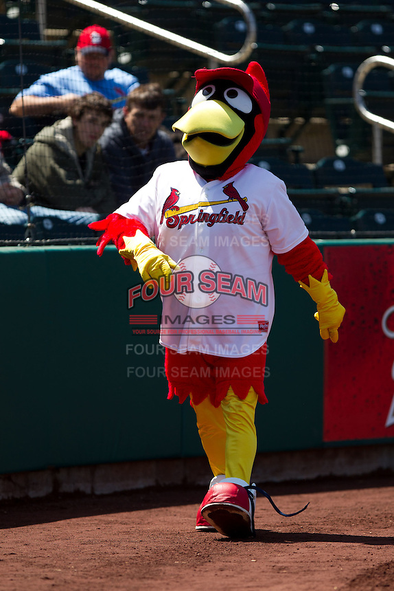 Louie during a game against the Frisco RoughRiders on April 16, 2011 at Hammons Field in Springfield, Missouri.  Photo By David Welker/Four Seam Images