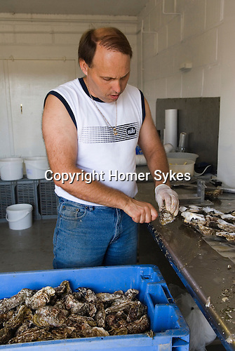 Whitstable Oyster Festival, Kent England 2007. Graham West fisherman, his family have been in Whitstabel since 1906 opening oysters.